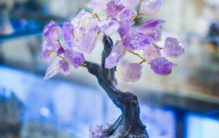 albero feng shui